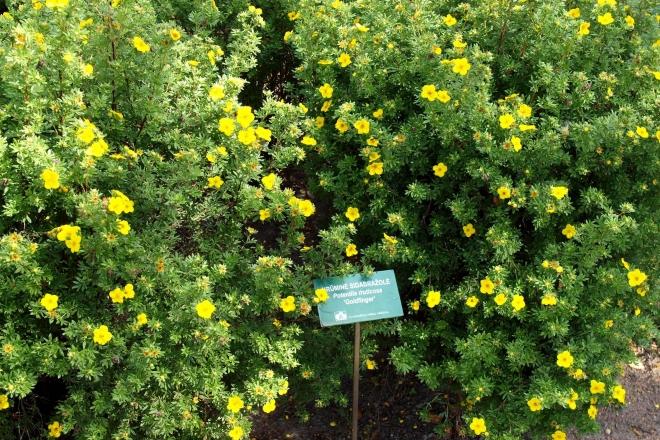 Traupis Botanical Garden