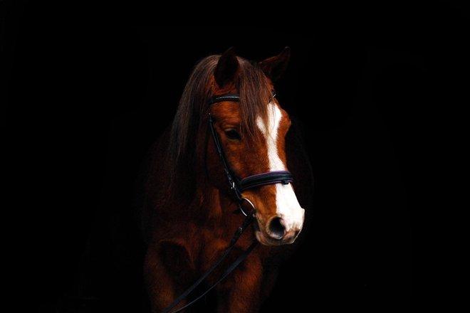Equestrian club Origonas